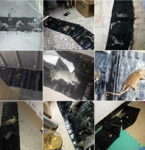 47 Mice Glue Traps Rodent Indoor Snake