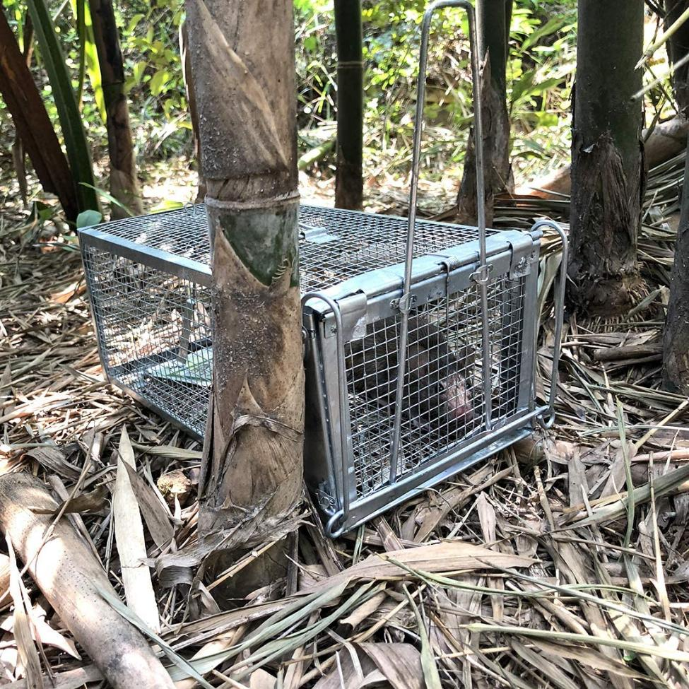 Rodent Cage for Chipmunk 10.5X5.5