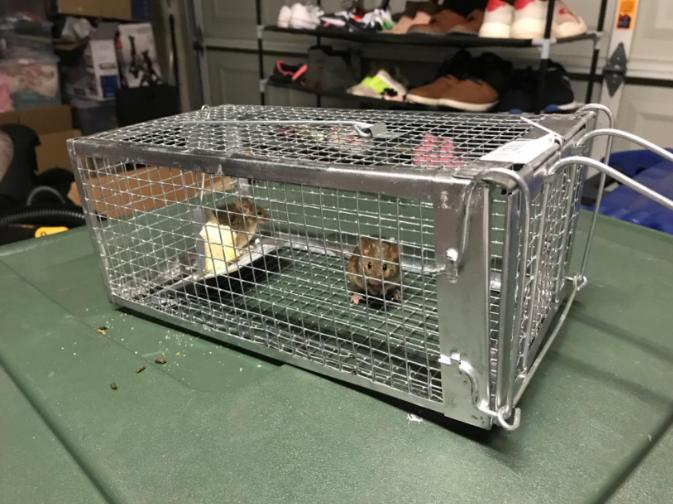Rodent for Chipmunk Small Rabbit Cage 10.5X5.5