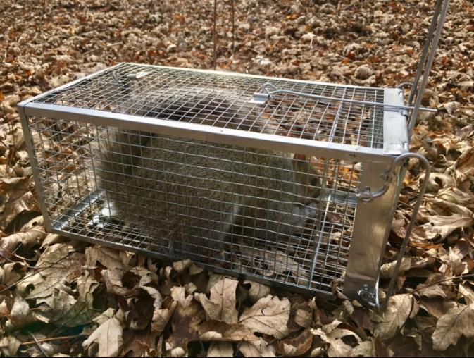 Rodent Cage Catch for Mouse Chipmunk 10.5X5.5